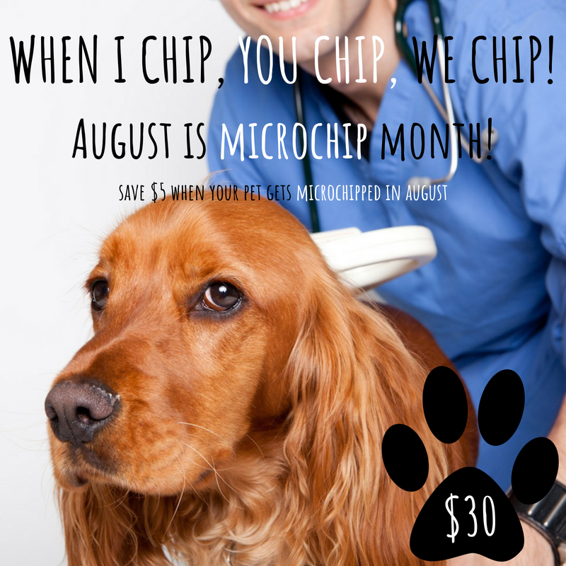 Microchip Month at Randall Orchard Animal Hospital